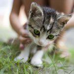 Os gatos podem ser vegetarianos?
