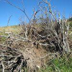 Você é uma árvore infrutífera? – por Karina C. Deana