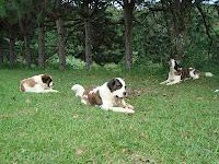 Cães ovolactovegetarianos – por Karina C. Deana