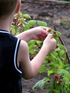 Como ensinar as crianças a comer comida saudável – por Mauro Carnassale