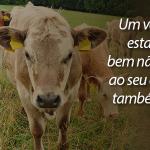 O consumo de carne e o meio ambiente
