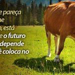 Carne: A Nova Vilã do Planeta