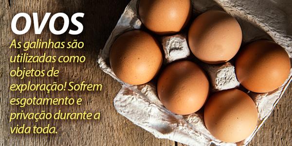 ovos-galinha-exploracao-vegano