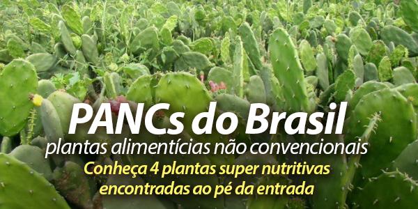 PANCs do Brasil: plantas não convencionais são uma delícia ao pé da estrada
